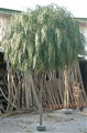 Fil Willow 360 cm.jpg